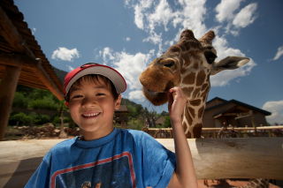Boy feeding giraffe at zoo