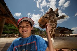 Boy feeding giraffe at zoo