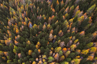 Colorful tree tops in fall