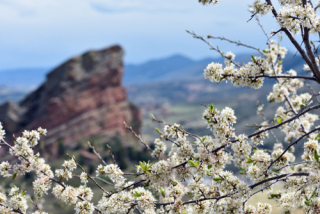 Flowers in the colorado mountains